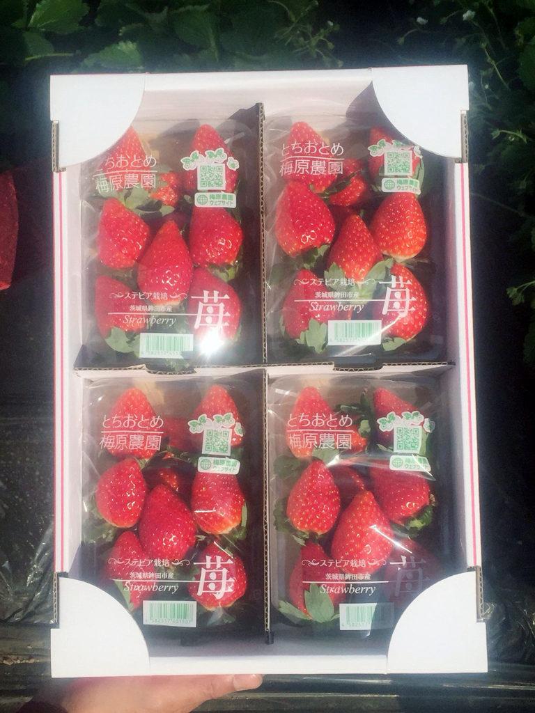 新しいイチゴのパッケージ